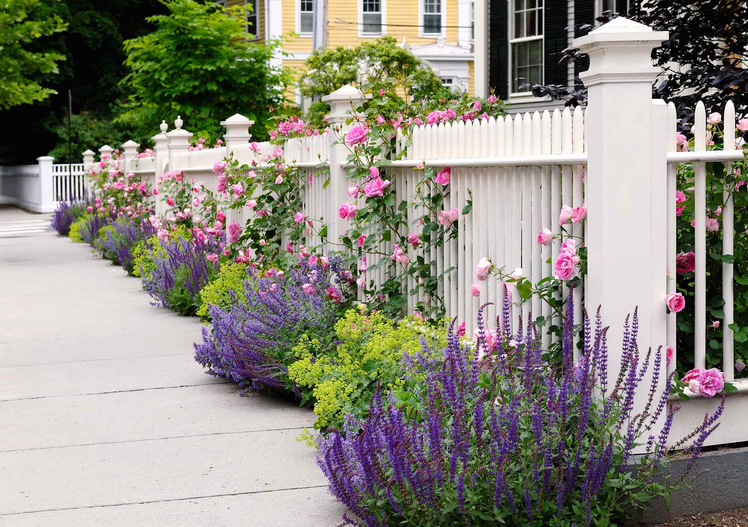 Landscaping - Fencing with mature flowers.